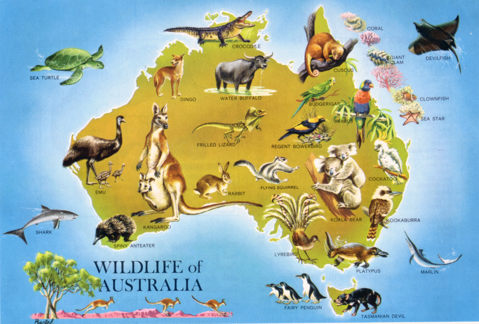 large detailed wildlife map of australia australia large detailed wildlife map